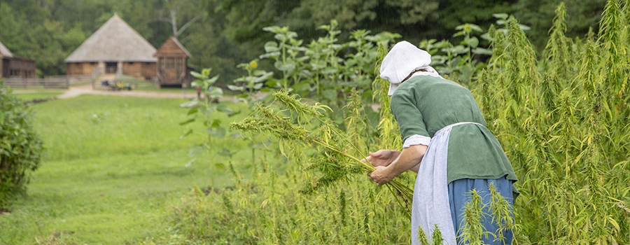 Hemp is Hip & Historic—Take It from George Washington